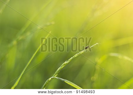 Fly On A Meadow-shallow Dof
