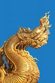 pic of dragon-fish  - Golden dragon on a blue background  - JPG