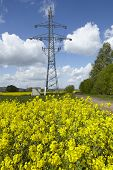 image of power transmission lines  - A yellow blossoming colza field a transmission tower and power lines as symbol for green alternative power - JPG