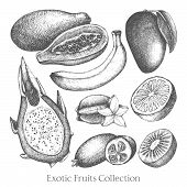 stock photo of pawpaw  - Vector collection of ink hand drawn exotic fruits sketch for kitchen and restaurant design - JPG