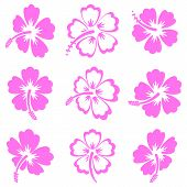 picture of hibiscus  - Pink vector hibiscus silhouette icons on white background - JPG