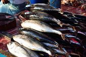 picture of fish  - Fresh Tuna fish on display for sale in a wet fish market Kota Kinabalu Sabah Malaysia - JPG