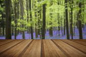 picture of harebell  - Beautiful carpet of bluebell flowers in Spring forest landscape with wooden planks floor - JPG