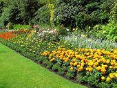 pic of marigold  - Flowerbed border of marigolds in a park formal garden - JPG