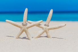 picture of shell-fishes  - wedding rings on star fish - JPG