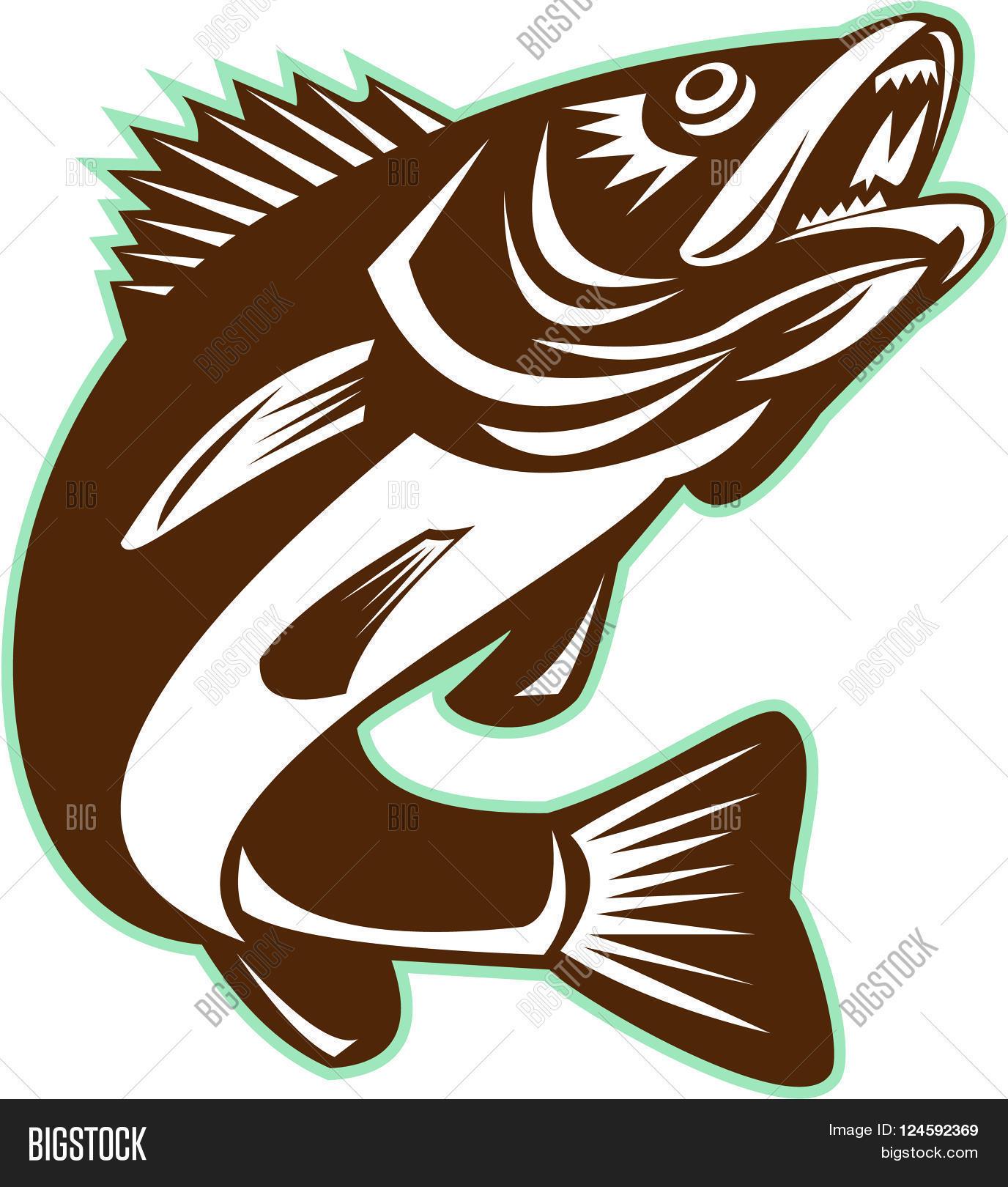 Freshwater fish jumping - Illustration Of A Walleye Sander Vitreus Formerly Stizostedion Vitreum A Freshwater Perciform Fish Jumping