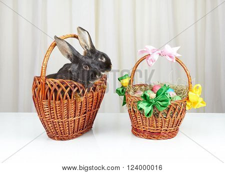 Basket with rabbits and Easter basket on white background