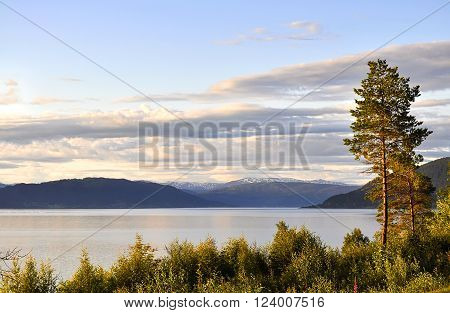 Pine trees on shore of sea bay illuminated by sun in slightly pink. In the blue sky cirrus clouds. Smooth surface of  water reflects pink highlights. Calm atmosphere. Early twilight. Norway.
