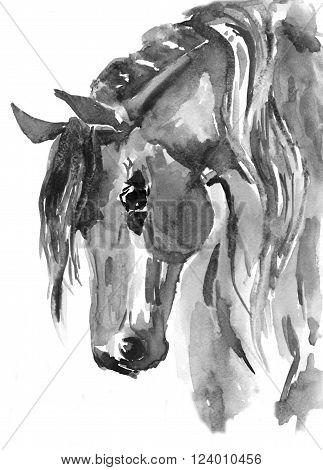 Horse head. Black-white watercolor illustration. Hand Paint