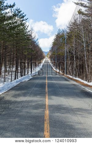 Icy road in a forest at day