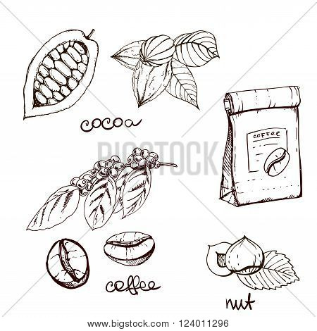 hand drawn ink cocoa beans coffee beans hazelnut. vector illustration of leaves and fruits. Vector eps 10.