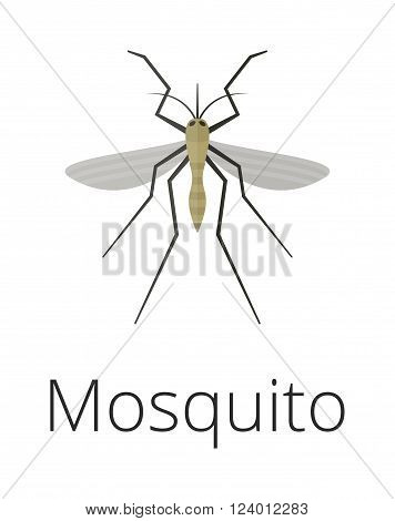 Anopheles mosquito vector illustration. Anopheles mosquito isolated on white background. Anopheles mosquito vector icon illustration. Anopheles mosquito isolated vector. Anopheles mosquito silhouette