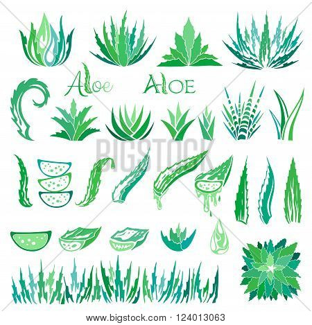 Aloe vera design elements. Aloe vera icons collection.