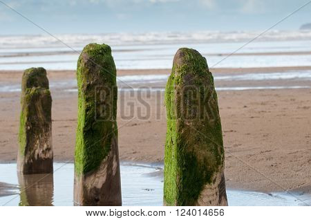 Three wooden posts forming part of an old breakwater