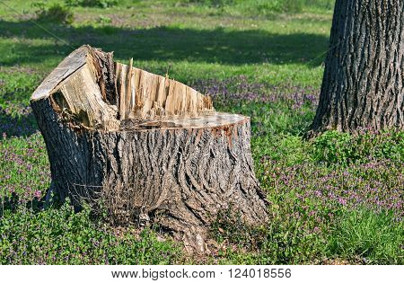 Closeup of the part of a rough cut tree trunk in the forest