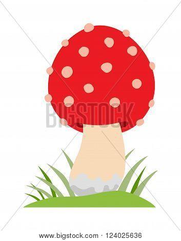 Amanita poisonous mushroom, isolated vector amanita on white background. Amanita mushroom, Amanita muscaria. Red amanita muscaria isolated on white background.