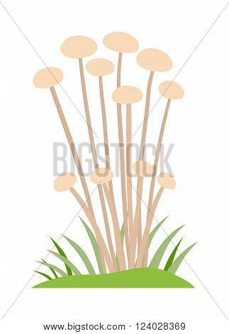 Toadstool illustration. Mushrooms toadstool on a white background. Mushroom toadstool. Toadstool toxic fairy natural. Toadstool vector. Toadstool isolated on white.
