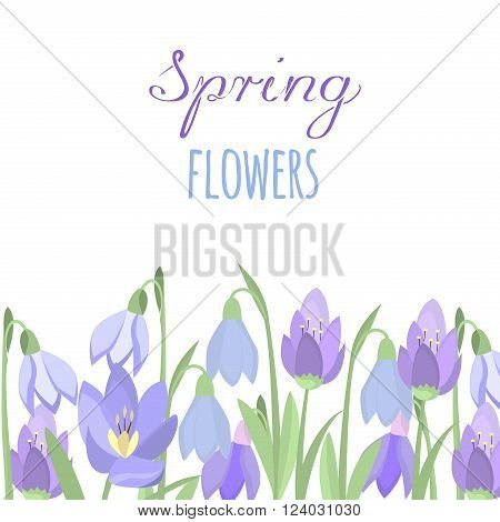 Early spring purple crocus and snowdrops nature beauty flowers vector. Crocus snowdrops flower color and purple crocus bouquet petal natural bloom. Purple crocus and snowdrops.