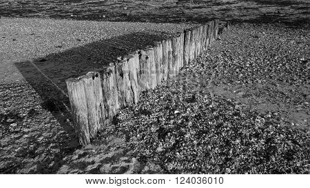 Row of weathered wooden groyne posts at Lepe beach, Hampshire, England