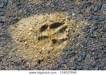 The Wolf Track in a muddy ground. Natural background from wilderness.