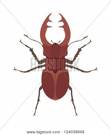 Horn Beetle cartoon vector illustration. Rhino beetle cartoon vector. Close up brown horned beetle on white background. Horned insect beetle
