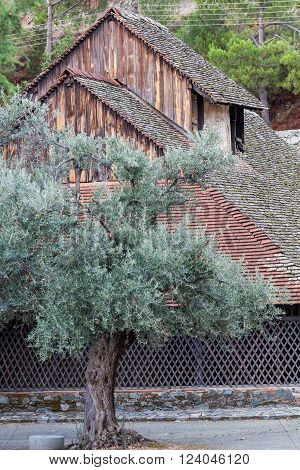 Olive tree at Panagia tou Arakou church, Lagoudhera, Troodos mountains, Cyprus