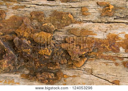 Closeup background texture photo of petrified ancient wood changing into stone by nature