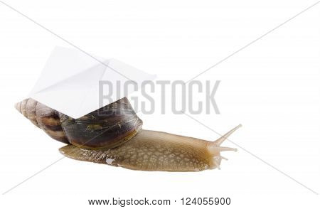 Snail carrying an envelope isolated on white with empty space for your text (snail mail concept)