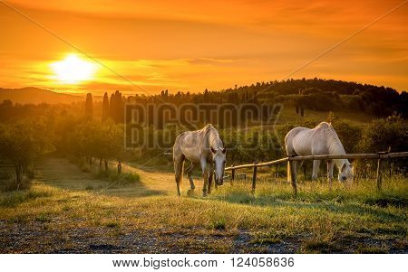 Wild Horses And Tuscan Sunrise