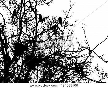 crows and nests on branches of tree vector silhouette