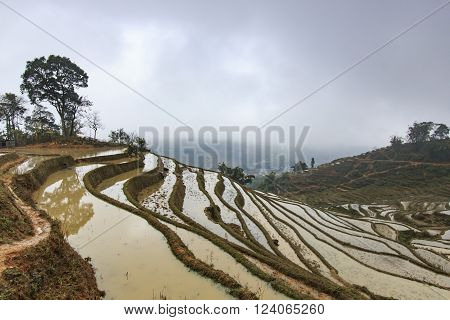 Famous Rice terraces of Sapa in Vietnam