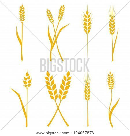 Wheat ears or rice icons set. Agricultural symbols isolated on white background. Design elements for bread packaging or beer label. Vector illustration.