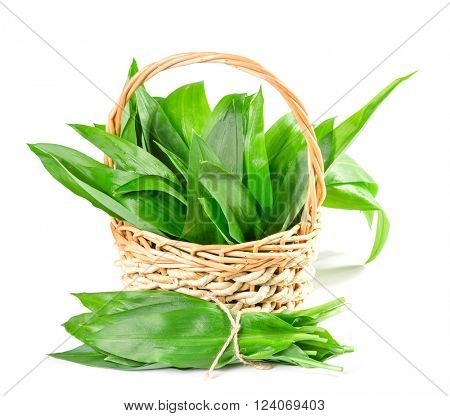 Basket with wild garlic leaves on a white background