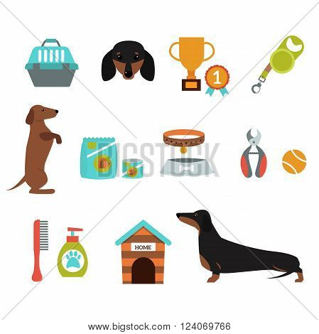 Dachshund dog playing infographic vector elements set. Flat style dachshund dog infographic symbols. Dachshund puppy dog domestic symbols collection