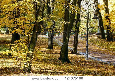 Autumn city park with paths strewn with yellow leaves and lamp.