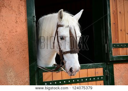 A portrait of a thoughtful horse on the stable.