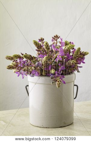 Wild purple flowers In a Stoneware Jar on table top with copy space.