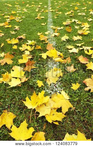 End of football season. Dry maple leaves fallen on ground of natural green football turf with painted white line .