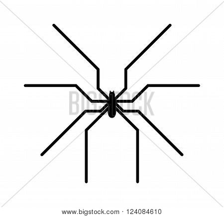 Spider black silhouette arachnid fear graphic and spider black silhouette scary, animal poisonous design. Spider black silhouette nature phobia. Black spider insect danger silhouette vector icon.