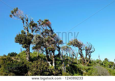 Weird looking trees on the Muelle de las Almas Trek