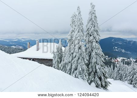 Icy Snowy Fir Trees In Winter Mountain.