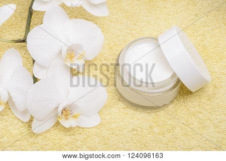 Cream And Orchid