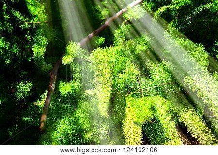 Lush green foliage with sunrays shining through