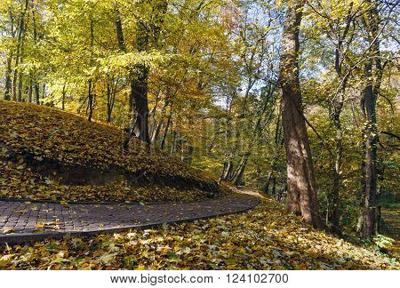 Stony paths and hills strewn with yellow maple leaves in autumn city park.