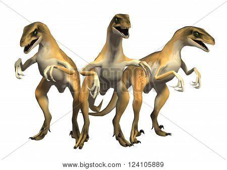3D render of three Raptor dinosaurs isolated on white background.