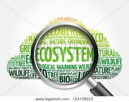 Ecosystem Word Cloud