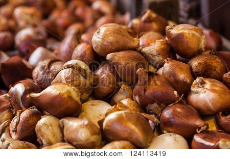 Close-up of a heap of tulip bulbs on a flower market stall.