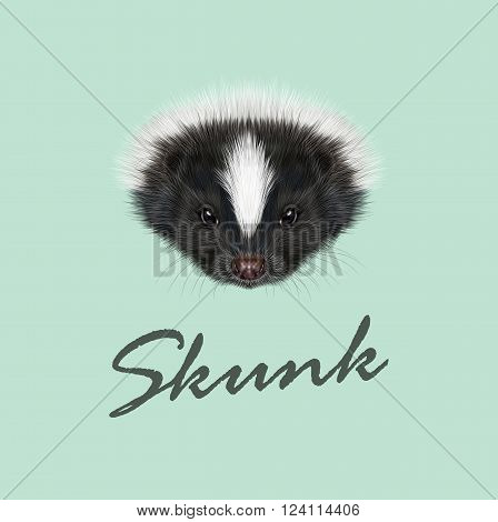 Cute face of Striped skunk on green background.