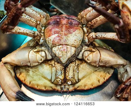 Great edible crab alive at a fish market. Traditional food in Lisbon, Portugal
