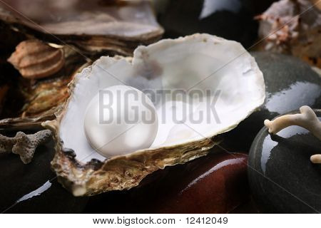 Image of a white pearl in the shell on wet pebbles.
